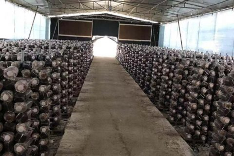 福建省永春食用菌现代农业